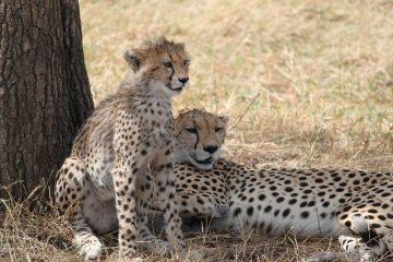 3 Tage Masai Mara Air Safari