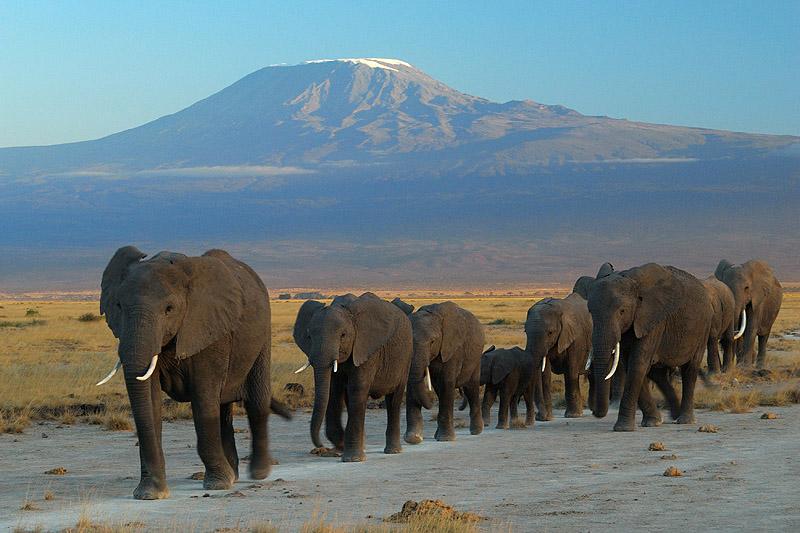4 Tage Tsavo Ost West Amboseli
