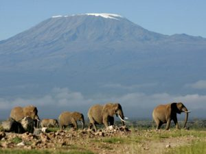 amboseli-national-park-kenia