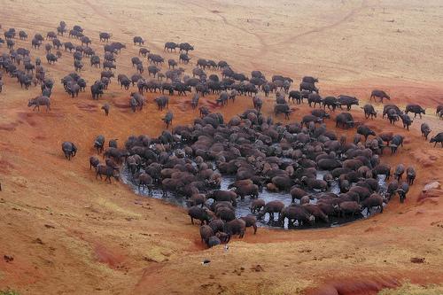 wasserstelle-im-tsavo-national-park-kenia